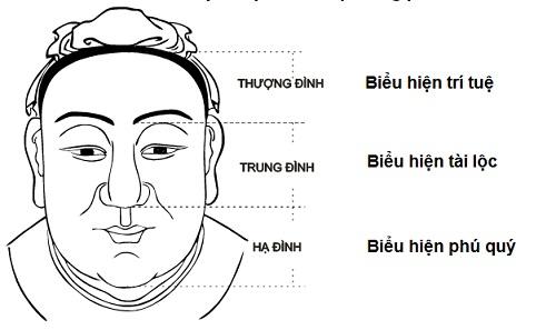vai trò của chiếc mũi trong nhân tướng học